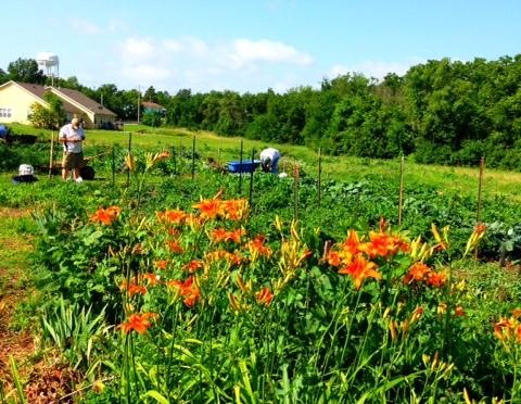Beautiful Hi-Crest Garden